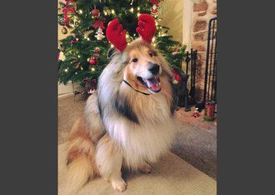 Christmas_Ted