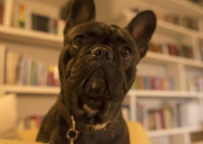 doglibarynoeffect
